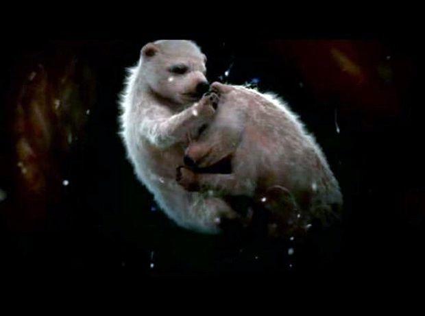 Унікальні кадри тварин, що знаходяться в утробі матері