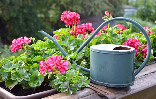 Найкорисніші кімнатні рослини для вашого будинку