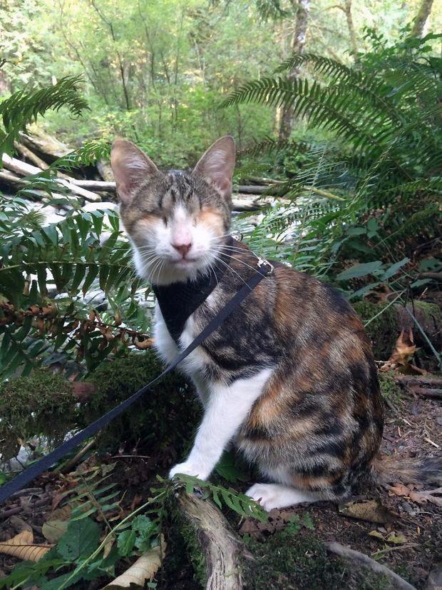 Зворушлива історія сліпої кішки Honey Bee