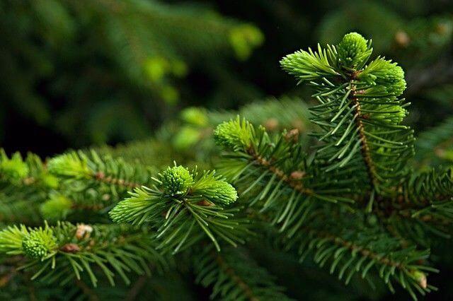 7 простих і доступних рослин, які позбавлять від зимових застуд