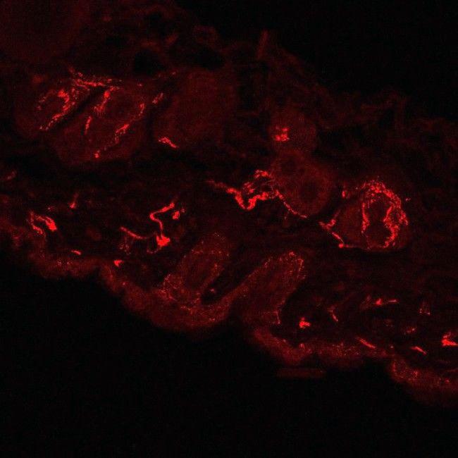 Опублікували найдокладніші зображення нервів