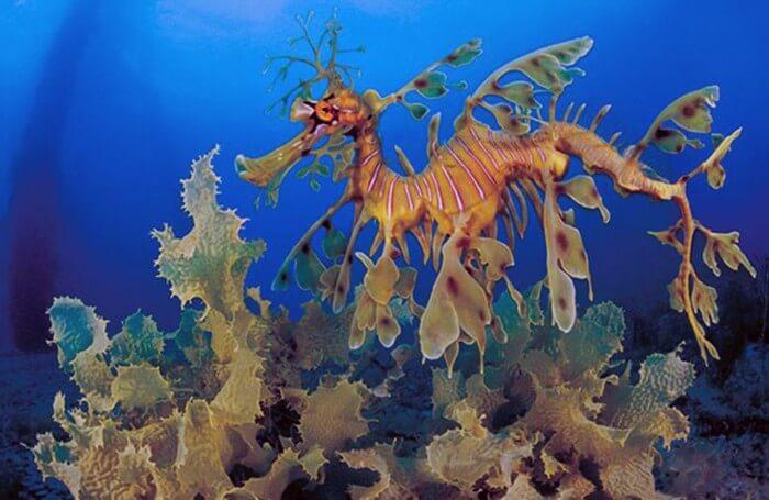 Цікаві факти про самих незвичайних тварин світу