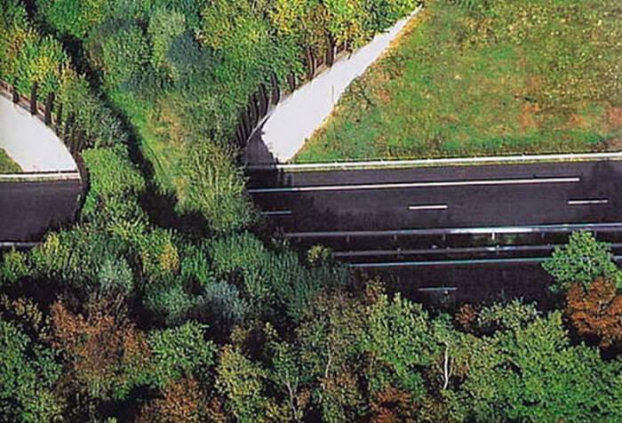 Вражаючі мости для диких тварин, побудовані на жвавих трасах