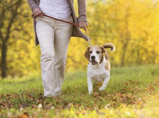 Як правильно доглядати за собакою чи кішкою: рекомендації фахівців