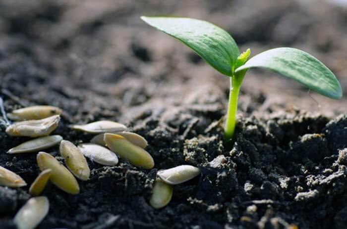 Як швидко, легко і ефективно підготувати насіння до посіву