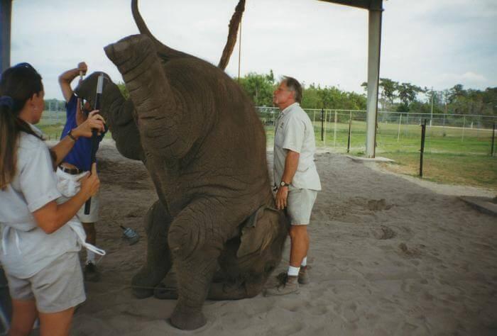 10 важливих причин ніколи не ходити в цирк