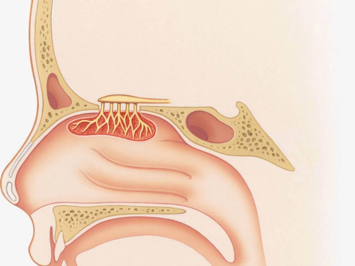 Як відновлюється організм, якщо кинути палити?