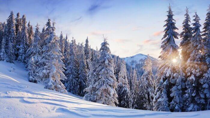 Як вижити в зимовому лісі без рушниці?