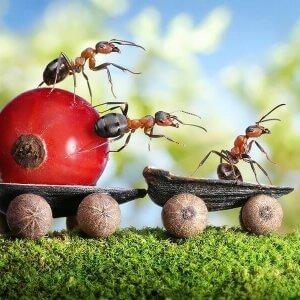 8 натуральних способів вигнати мурах