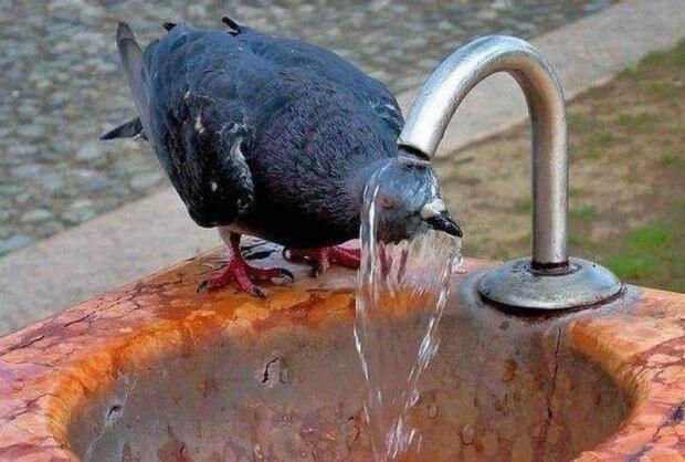 Які правила поведінки в жарку погоду?